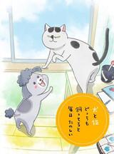 Inu to Neko Docchi mo Katteru to Mainichi Tanoshii